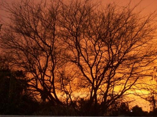 beautiful tree and sunset 002